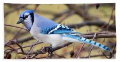 The Winter Blue Jay  Beach Towel