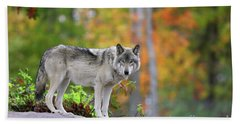 The Wolf. Beach Towel