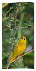 Beach Towel featuring the photograph The Yellow Warbler by Bill Wakeley