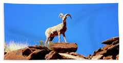 The Young Ram Reaches The Sky Line Beach Towel