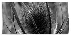Beach Towel featuring the photograph Thistle by Keith Elliott