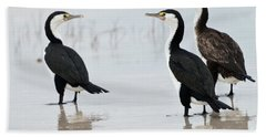 Beach Sheet featuring the photograph Three Cormorants by Werner Padarin