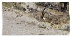 Dry Mountain Slope With Three Deer Beach Towel