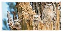 Three Great Horned Owl Babies Beach Towel