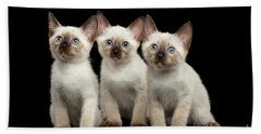 Three Kitty Of Breed Mekong Bobtail On Black Background Beach Towel
