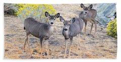 Three Mule Deer In High Desert Beach Towel
