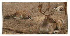 Three Deer Resting Beach Sheet