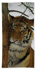 Tiger 2 Da Beach Towel by Ernie Echols