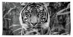 Tiger B/w Beach Sheet