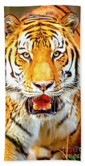 Tiger On The Hunt Beach Towel by David Millenheft