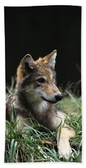 Timber Wolf Canis Lupus Portrait Beach Towel