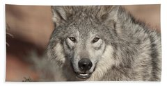Timber Wolf Portrait Beach Towel