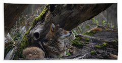 Timber Wolf Beach Towel by Randy Hall