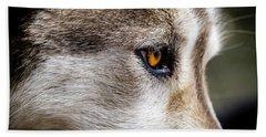 Timber Wolf Stare Beach Towel