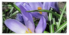 Time For Crocuses Beach Sheet