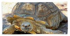 Timothy The Giant Tortoise Beach Towel