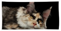 Beach Towel featuring the photograph Tired Maine Coon Cat Lie On Black Background by Sergey Taran
