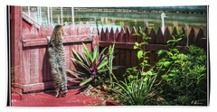Beach Towel featuring the photograph Tomcat Breakfast by Hanny Heim
