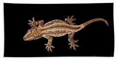 Top View Of Gargoyle Gecko, Rhacodactylus Auriculatus Staring Isolated On Black Background. Native T Beach Towel
