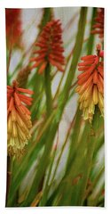Torch Lily At The Beach Beach Sheet by Sandi OReilly