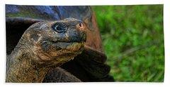 Tortoise Beach Sheet