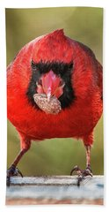Beach Towel featuring the photograph Tough Guy Cardinal by Jim Moore