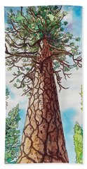 Towering Ponderosa Pine Beach Sheet