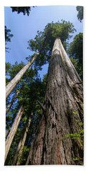 Towering Redwoods Beach Towel