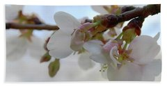 Dogwood Branch Pink Beach Sheet