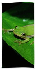 Tree Frog On Hibiscus Leaf Beach Towel by DigiArt Diaries by Vicky B Fuller