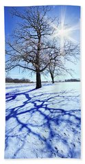 Beach Towel featuring the photograph Tree Light by Phil Koch