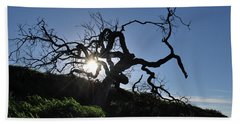 Beach Towel featuring the photograph Tree Of Light - Sunshine Through Branches by Matt Harang
