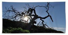 Beach Sheet featuring the photograph Tree Of Light - Sunshine Through Branches by Matt Harang