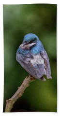 Beach Towel featuring the photograph Tree Swallow In Costa Rica by John Haldane