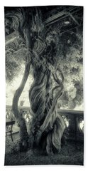 Tree Trunk Bw Series Y6693 Beach Towel
