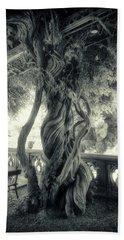Tree Trunk Bw Series Y6693 Beach Sheet