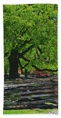 Tree With Colonial Fence Beach Towel