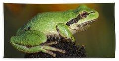 Treefrog On Rudbeckia Beach Sheet