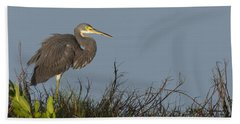 Tri-colored Heron In The Morning Light Beach Sheet
