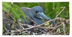 Nesting Tricolored Heron Beach Towel