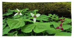 Trillium By Log Beach Sheet by Alan Lenk