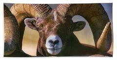 Trophy Bighorn Ram Beach Towel