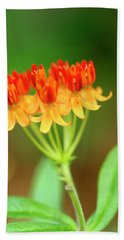 Tropical Milkweed Beach Towel