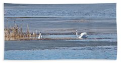 Trumpeter Swans 0933 Beach Sheet by Michael Peychich