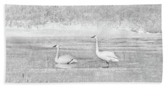 Beach Sheet featuring the photograph Trumpeter Swan's Winter Rest Gray by Jennie Marie Schell