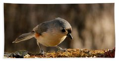 Tufted Titmouse In Fall Beach Sheet by Sheila Brown
