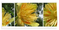 Tulip Tree Flowers Beach Towel by Tina M Wenger