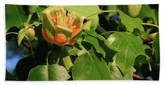 Tulip Poplar Beach Sheet
