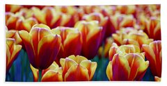 Tulips At Sunset Beach Towel by Michael Cinnamond