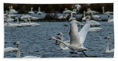 Tundra Swan And Liftoff Head Start Beach Towel
